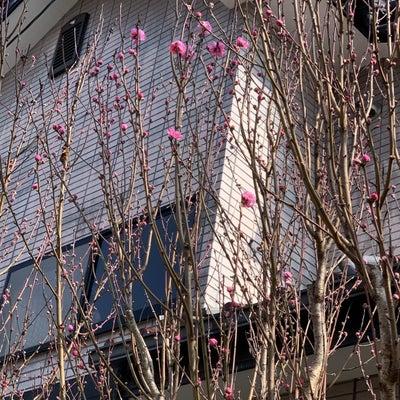 花桃の花の記事に添付されている画像