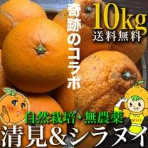 清見オレンジとシラヌイ販売です。セットも!の記事に添付されている画像