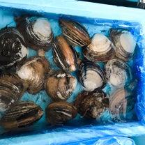 北海道 長万部産 ほっき貝の記事に添付されている画像