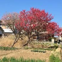 桃の花  と  春の野草の記事に添付されている画像