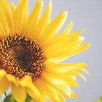 春分。新たな気持ちでの記事に添付されている画像