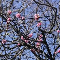春分の日の記事に添付されている画像