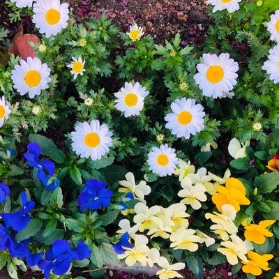 看護師、春分の日の記事に添付されている画像