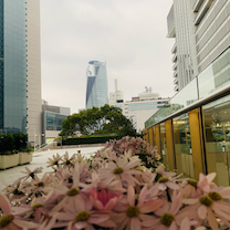 今日は春分の日 午前中は催花雨となった名古屋の記事に添付されている画像