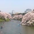 #桜カラーの画像