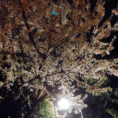 夜桜の記事に添付されている画像