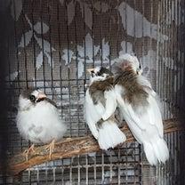 水浴び初体験!飛べない鳥さん、猛禽類の事。の記事に添付されている画像