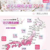 JOY517《毎日更新中》 『桜の花が咲くと心が沸き立つ』の記事に添付されている画像