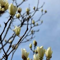 春分の日☆天秤座満月の記事に添付されている画像