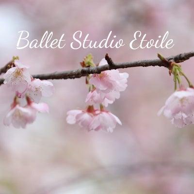 桜の開花宣言の記事に添付されている画像
