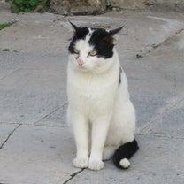 欧州遠征2019「猫編」の記事に添付されている画像