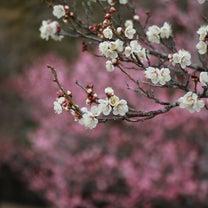 春のメンバー募集♪次回練習日程決定の記事に添付されている画像