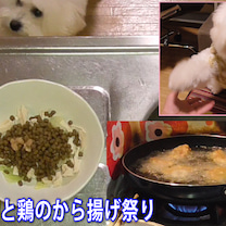 夜ご飯の準備と鶏のから揚げ祭り!ビションフリーゼの記事に添付されている画像