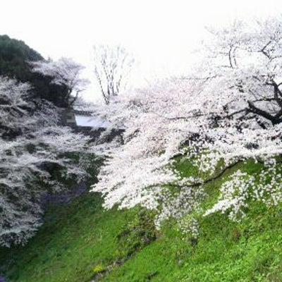 桜と言えば…の記事に添付されている画像
