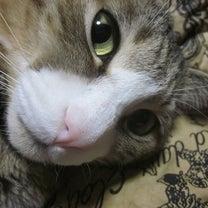 猫の日(=^・^=)ぷらすの記事に添付されている画像