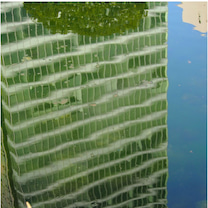 ジャポン・浜離宮の鯉の記事に添付されている画像