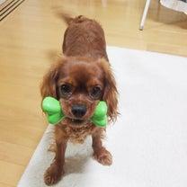 高齢家庭での犬との生活の記事に添付されている画像