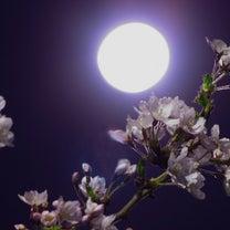 桜が咲く頃。の記事に添付されている画像