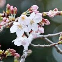 天気は不安定だけど、確実に春が近づいてる!の記事に添付されている画像