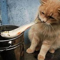 猫のおしゃべり/モラハラから身を守る方法の記事に添付されている画像