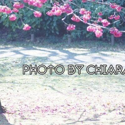 春はイロイロと新しくしたくなるッ!!の記事に添付されている画像