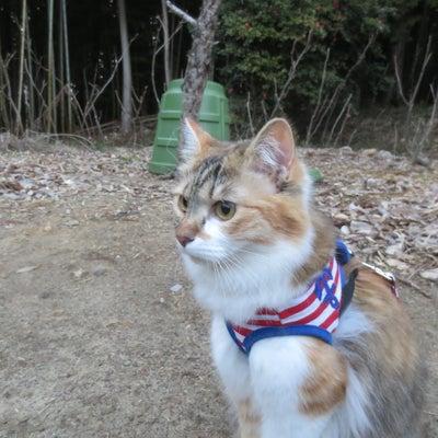 【猫問題55】どっちが、みかん?ゆず?の記事に添付されている画像