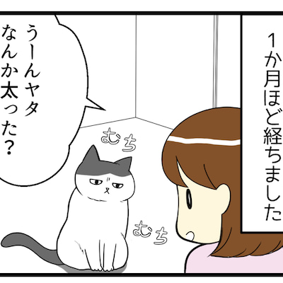 猫の毛ギャップがすごい(更新のお知らせ)の記事に添付されている画像