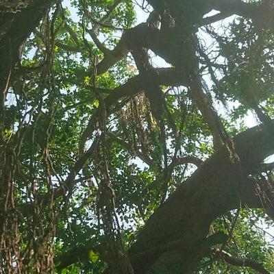 知らないオジサンと那覇散策  『植物編』の記事に添付されている画像
