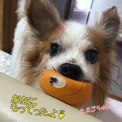 キミん家のワンコのお気に入り見せてバトン☆来たぁ❗(●^o^●)の記事に添付されている画像