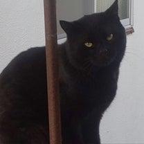 父猫、黒ちゃんから→黒猫、景ちゃんへの記事に添付されている画像