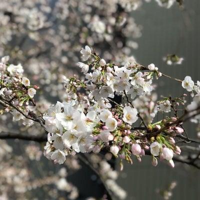 開花!の記事に添付されている画像