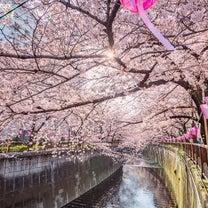 オススメお花見スポット♡の記事に添付されている画像