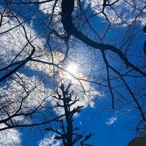 春分の日 春を感じるわたしの世界の記事に添付されている画像