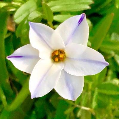 新しい始まりの春☆彡の記事に添付されている画像