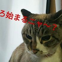 クイーンのライブが大好きな猫の記事に添付されている画像