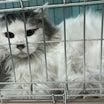若いママさん猫&TNRを進めよう!