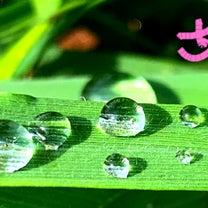 昨日綺麗な雨粒に出会えたYOの記事に添付されている画像