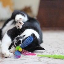 ちょろい猫の記事に添付されている画像