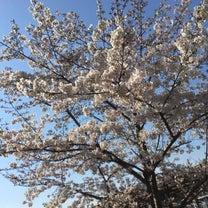桜の花の記事に添付されている画像