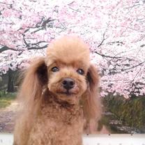 3月22日(金)スクープ!!の記事に添付されている画像