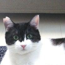 3月22日は「さくらねこの日」になったらしい!わが家の耳カット猫の記事に添付されている画像