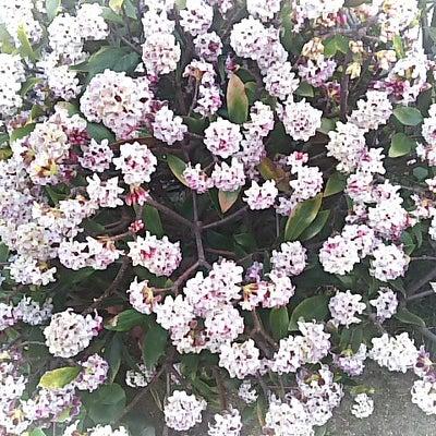 春の香り!の記事に添付されている画像