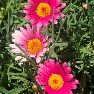 開花宣言、新しい始まりの記事に添付されている画像