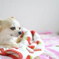 姫ちゃん、ありがとうの日の記事に添付されている画像