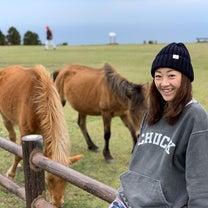 宮崎で天然記念物の野生馬に会いましたの記事に添付されている画像