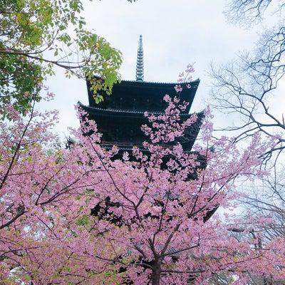 光を観る旅  in  東寺  は、シンクロざんまいっ!の記事に添付されている画像