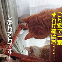No.1771 鏡よ鏡の記事に添付されている画像