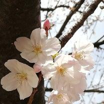 春うらら☆第10期入学式が開催されました!の記事に添付されている画像