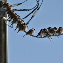 鳥たちが気になることの記事に添付されている画像