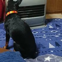 暑いのか、寒いのかの記事に添付されている画像